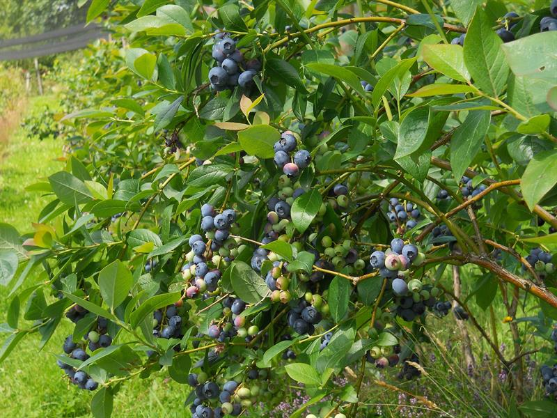 Pré des Fruits