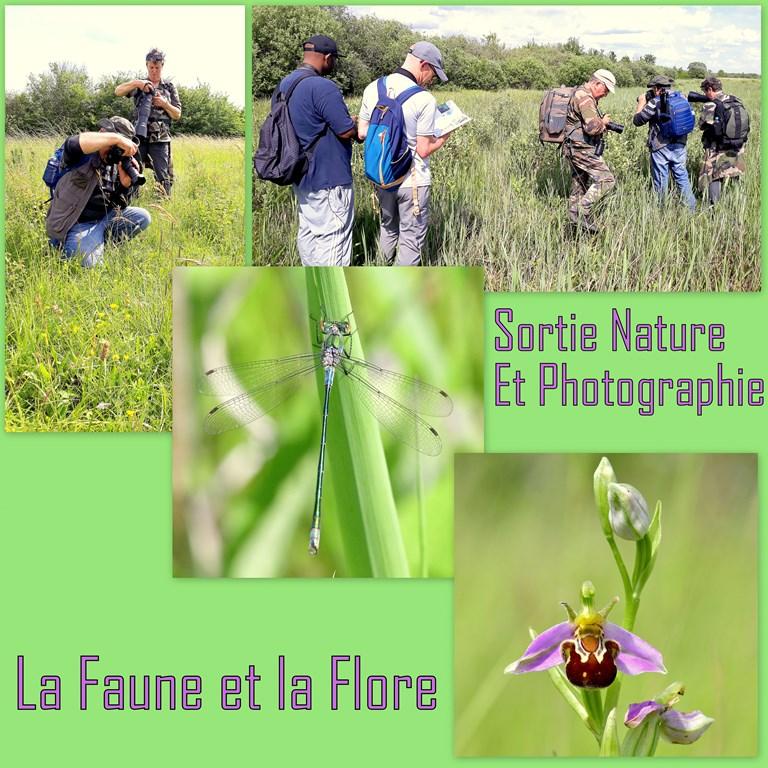 SORTIE NATURE ET PHOTOGRAPHIE