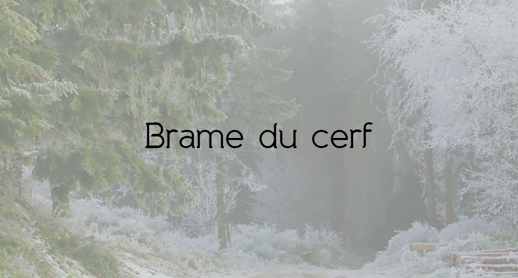 BRAME DU CERF