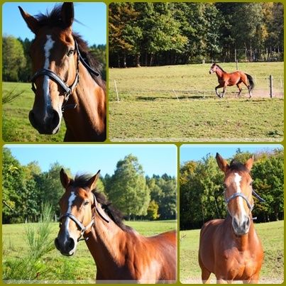 Le centre equestre de la grange puton a remiremont remiremont 88200 sports loisirs - Office du tourisme remiremont ...